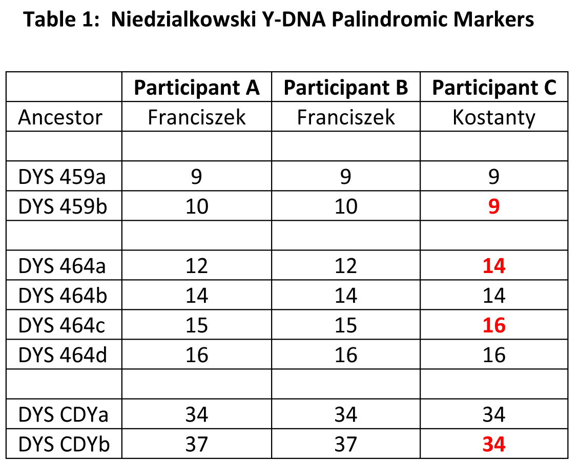Palindromic Markers in the Niedzialkowski DNA Project