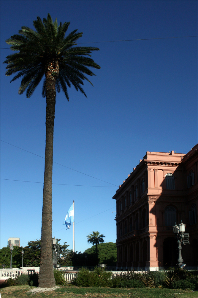 Palm Tree, Flag of Argentina, and Casa Rosada