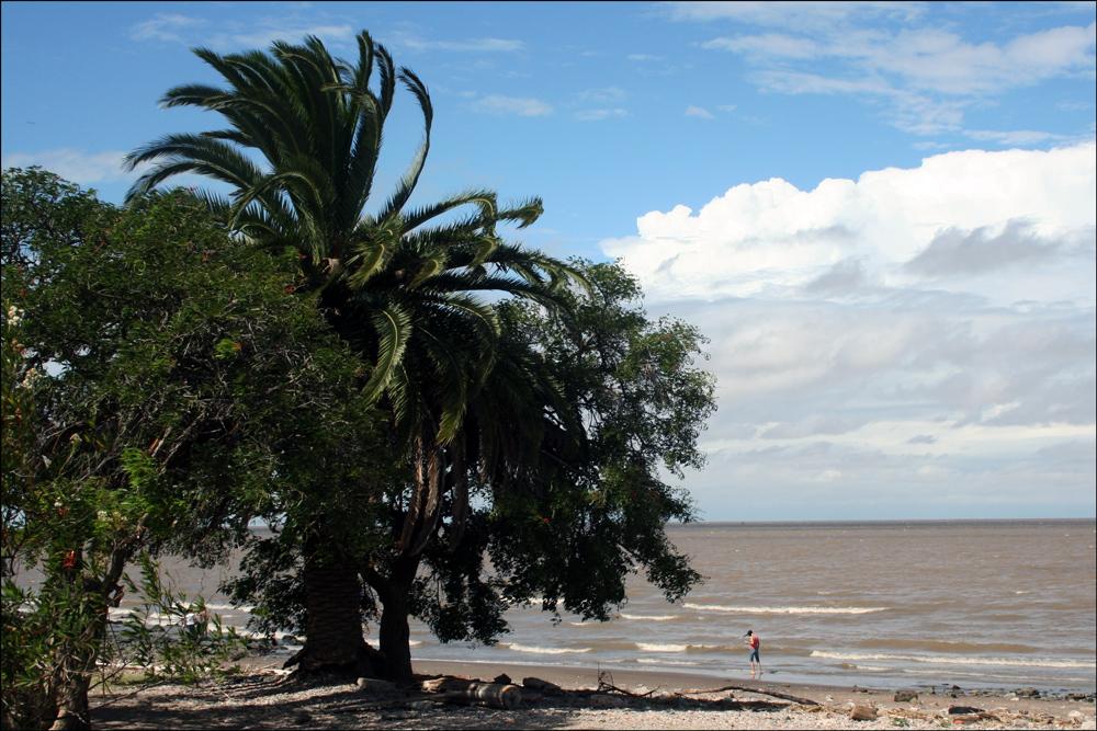 Río de la Plata from Reserva Ecológica Costanera Sur