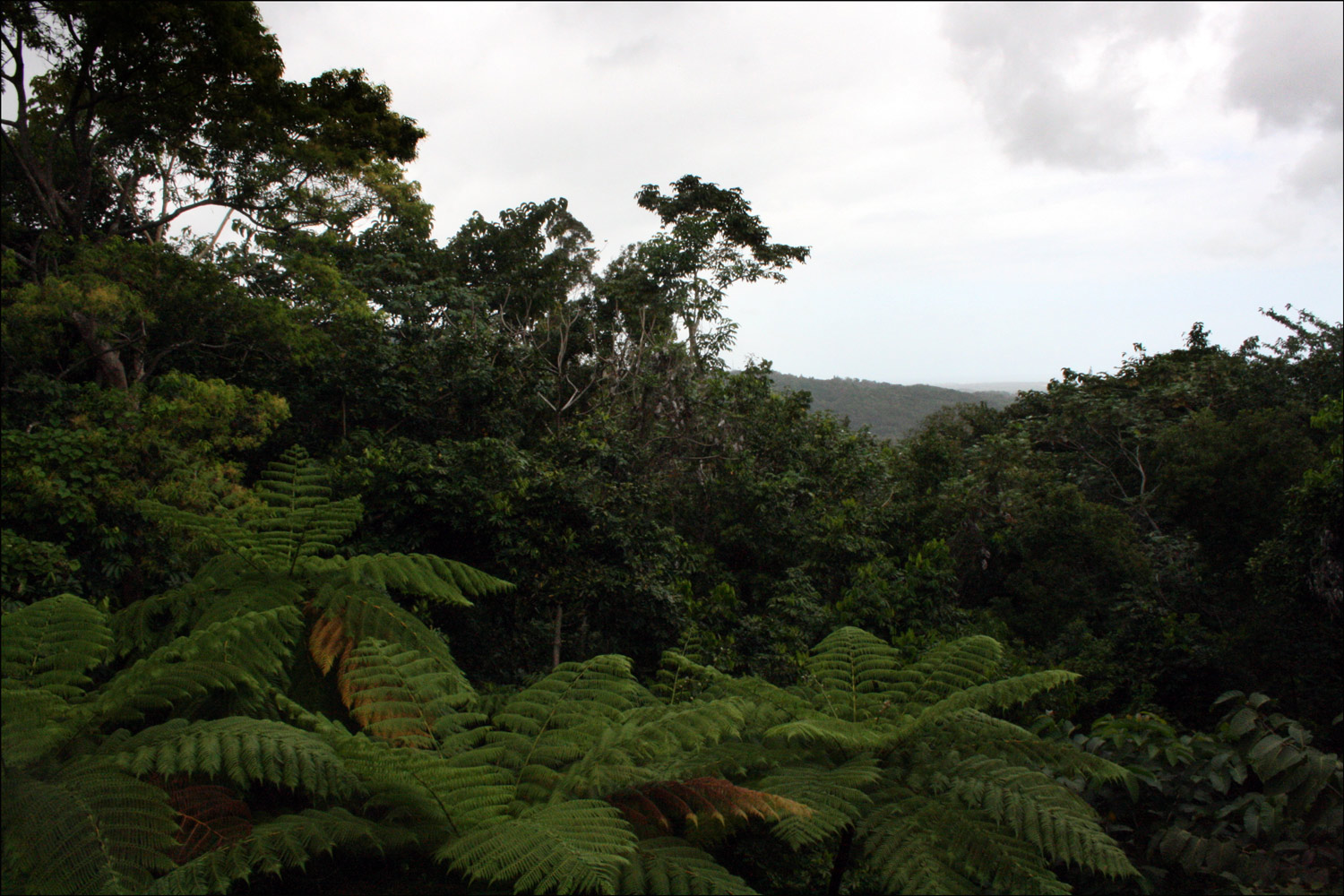 Vista of El Yunque Rainforest - 1