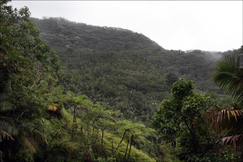 Vista of El Yunque Rainforest - 2