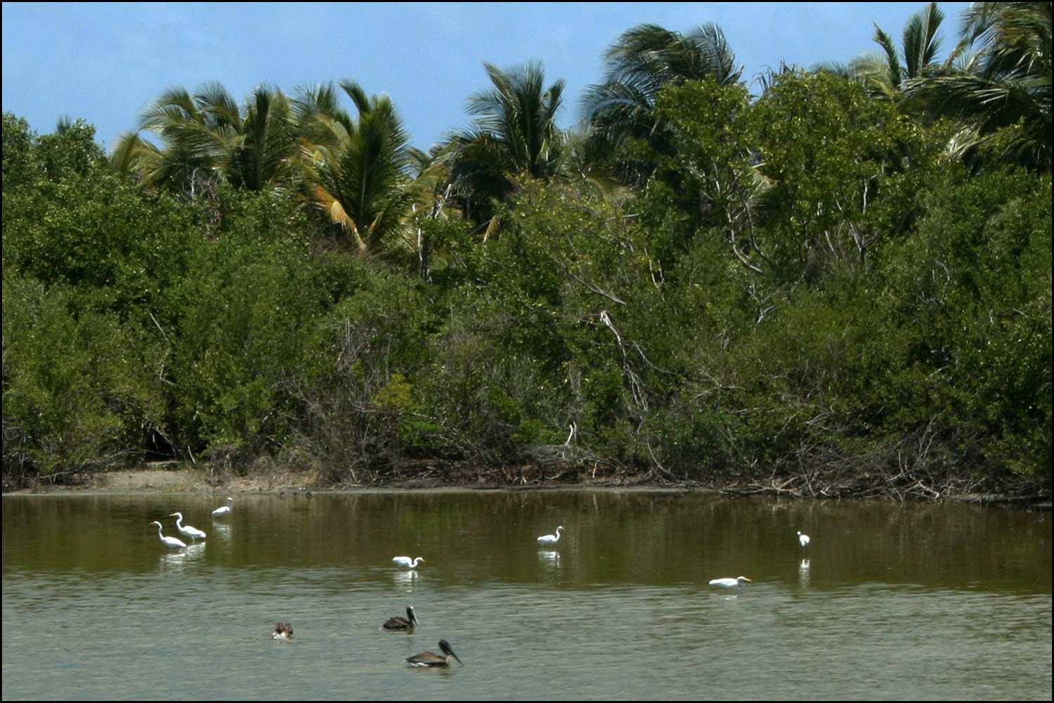 Herons and Pelicans on the Great Salt Pond