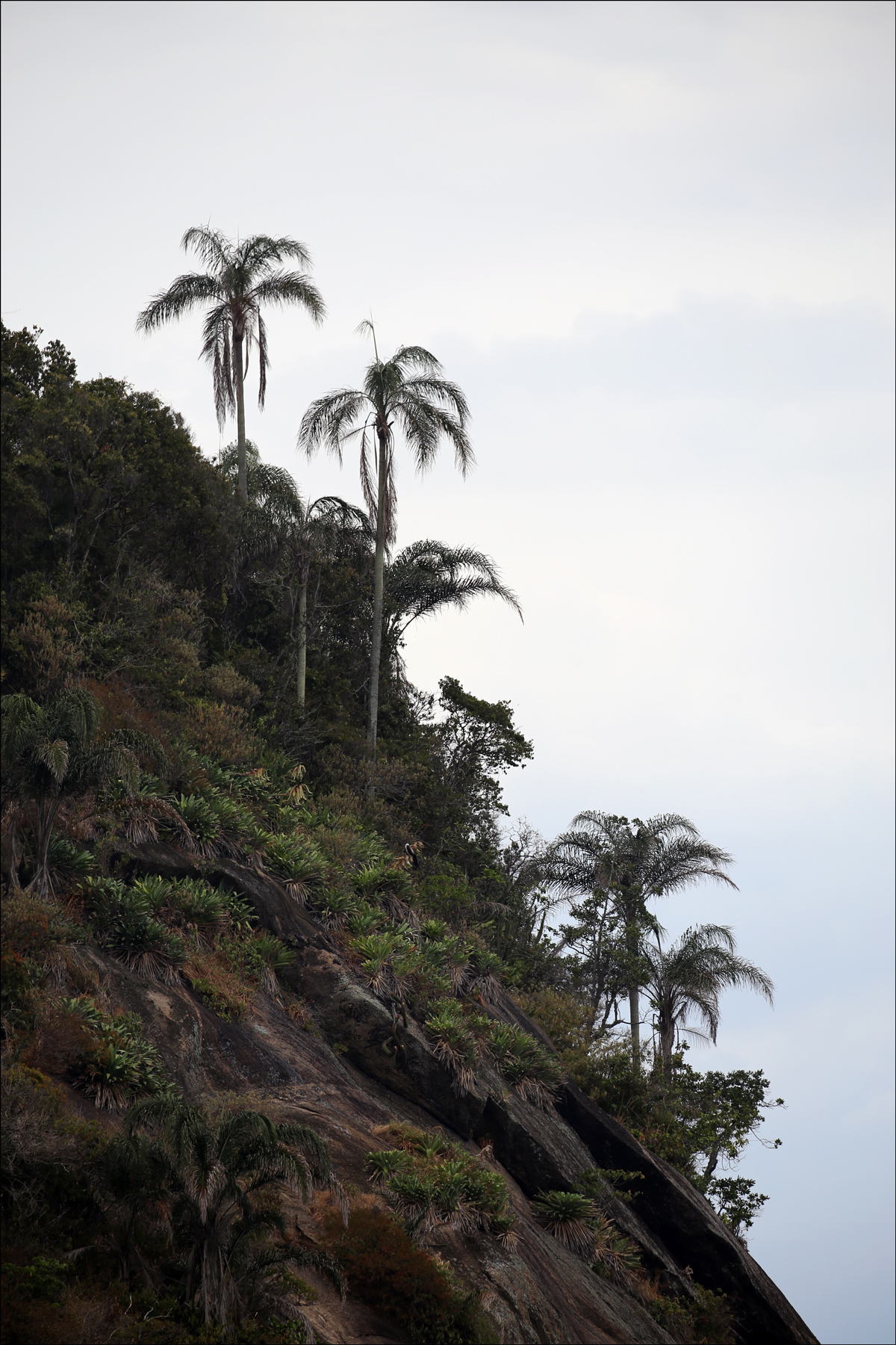 Hillside Palms at Copacabana Beach